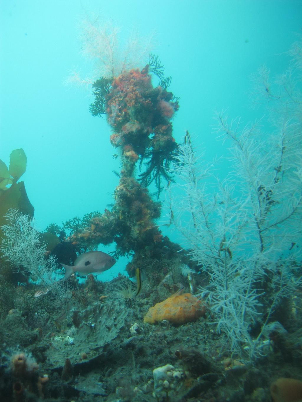 Corals in Milford Sound, NZ